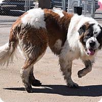 Adopt A Pet :: Sabastian - Phoenix, AZ