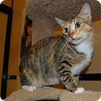 Adopt A Pet :: Lucille - Whittier, CA