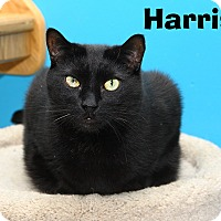 Adopt A Pet :: Harris - Oakland, NJ