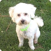 Adopt A Pet :: Dusty - Santa Monica, CA