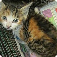 Adopt A Pet :: A380569 - San Antonio, TX