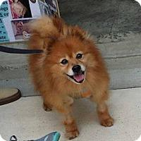 Adopt A Pet :: Clark - Delaware, OH