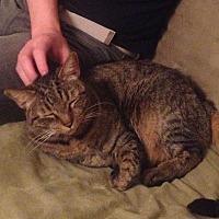 Adopt A Pet :: Brady - Rochester, NY