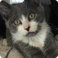 Adopt A Pet :: Milo - East Brunswick, NJ