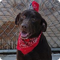 Adopt A Pet :: Maxx - Columbia, IL