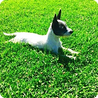 Adopt A Pet :: Jasmine - Rancho Cucamonga, CA