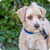 Adopt A Pet :: Tobias - San Diego, CA