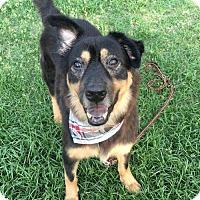 Adopt A Pet :: Xiao Ba - Richmond, BC
