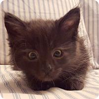 Adopt A Pet :: Wolfy - St. Louis, MO