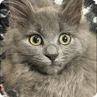 Adopt A Pet :: Leonardo - Colmar, PA
