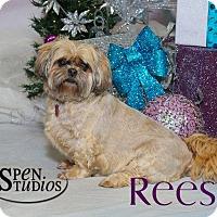 Adopt A Pet :: Reese - Valparaiso, IN