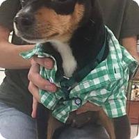 Adopt A Pet :: Tucker - Monrovia, CA