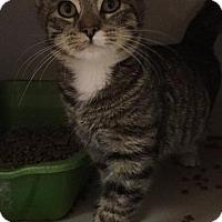 Adopt A Pet :: Natasha - Waverly, NY