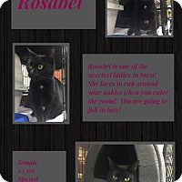 Adopt A Pet :: Rosabel - CLEVELAND, OH