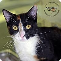 Adopt A Pet :: Leia - Lyons, NY