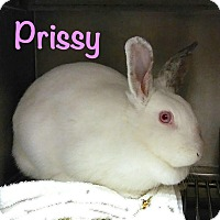 Adopt A Pet :: Prissy - El Cajon, CA