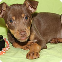 Adopt A Pet :: Cookie - Trenton, NJ