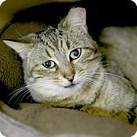 Adopt A Pet :: Amanda - Kettering, OH