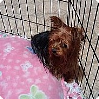 Adopt A Pet :: Cheyene - Lorain, OH