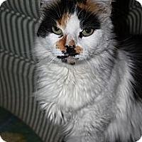 Adopt A Pet :: Twinkie - North Branford, CT