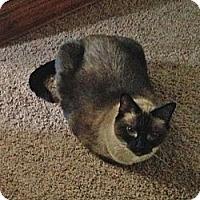 Adopt A Pet :: Audrey - Monroe, NC