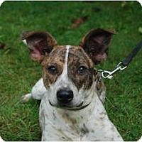 Adopt A Pet :: Gem - Rhinebeck, NY