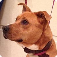 Adopt A Pet :: Manny - Rocky Mount, NC