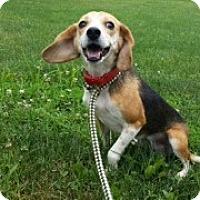 Adopt A Pet :: Lola - Brazil, IN