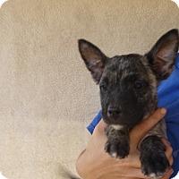 Adopt A Pet :: Tiny - Oviedo, FL