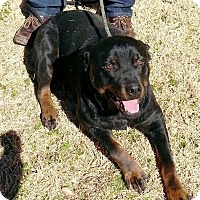 Adopt A Pet :: Clara - Rexford, NY