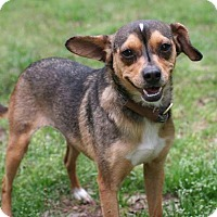 Adopt A Pet :: Sunshine - Towson, MD
