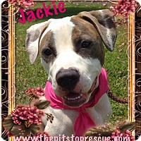 Adopt A Pet :: Jackie - Baton Rouge, LA