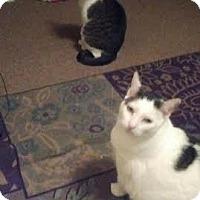 Adopt A Pet :: Wyatt & Hunter - Acushnet, MA