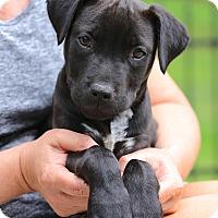 Adopt A Pet :: Boston~adopted! - Glastonbury, CT