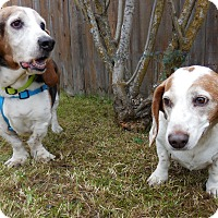 Adopt A Pet :: Cooter - Anchorage, AK
