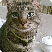 Adopt A Pet :: Mustang Sammy - Seminole, FL