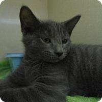 Adopt A Pet :: Frodo - Lancaster, PA