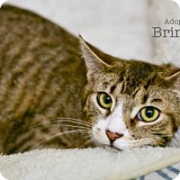 Adopt A Pet :: Brinkley - West Des Moines, IA