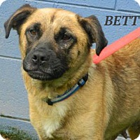 Adopt A Pet :: Betty - Baltimore, MD