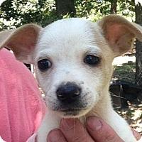 Adopt A Pet :: Kiefer - Boston, MA
