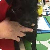 Adopt A Pet :: Bella - Dawson, GA