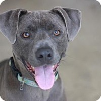 Adopt A Pet :: BLUE BOY - Kyle, TX