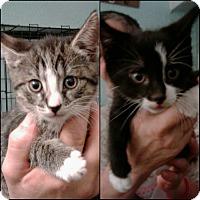 Adopt A Pet :: Thelma & Louise - Bronx, NY