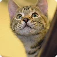 Adopt A Pet :: Feta - Aiken, SC