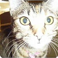 Adopt A Pet :: Tawny - Brea, CA