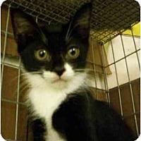 Adopt A Pet :: Lori - Davis, CA