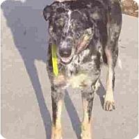 Adopt A Pet :: MoMo - Kingwood, TX