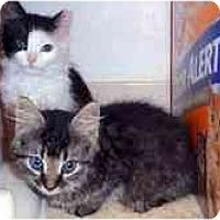 Adopt A Pet :: Pasha & Phoebe - Arlington, VA