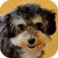 Adopt A Pet :: Tootsie - La Costa, CA