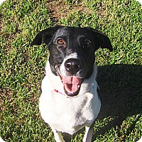 Adopt A Pet :: Brandi - Orange Park, FL